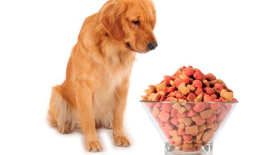 Veterinario explica cómo alimentar a un perro diabético