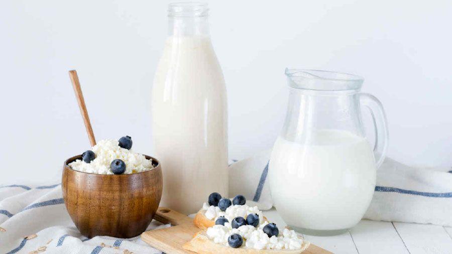 ¿Cuáles son las mejores opciones de productos lácteos?