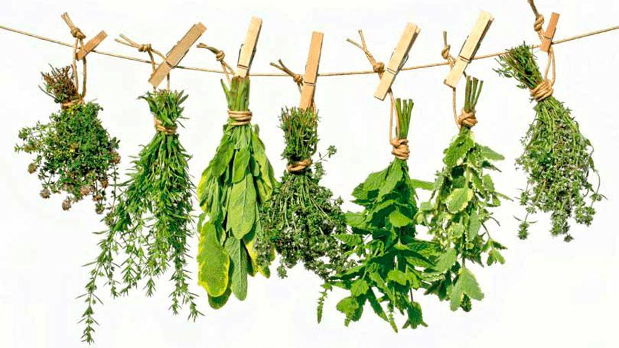 5 plantas medicinales para la diabetes